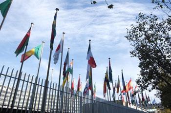 Les drapeaux des 58 pays membres du Conseil exécutif sont déployés pendant la Session